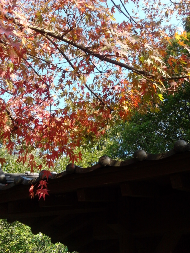 Autumn (Aki) in Japan